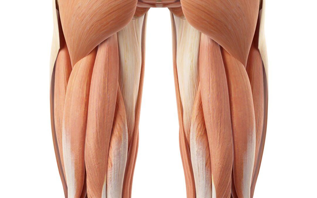 Naderwanie, zerwanie, naciągnięcie mięśnia dwugłowego uda (grupy kulszowo – goleniowej)